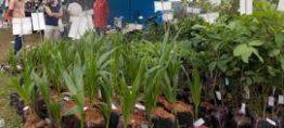 Kiến thức về cây giống dừa sáp