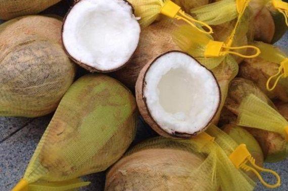 Dừa sáp – trái cây độc, lạ và giàu chất dinh dưỡng