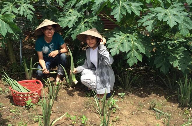 Từ bỏ cơ hội làm việc tại Singapore, Huệ về TP HCM khởi nghiệp với việc trồng nha đam, lá sâm, các loại thảo mộc để làm nên thương hiệu nước mát từ nông sản sạch.