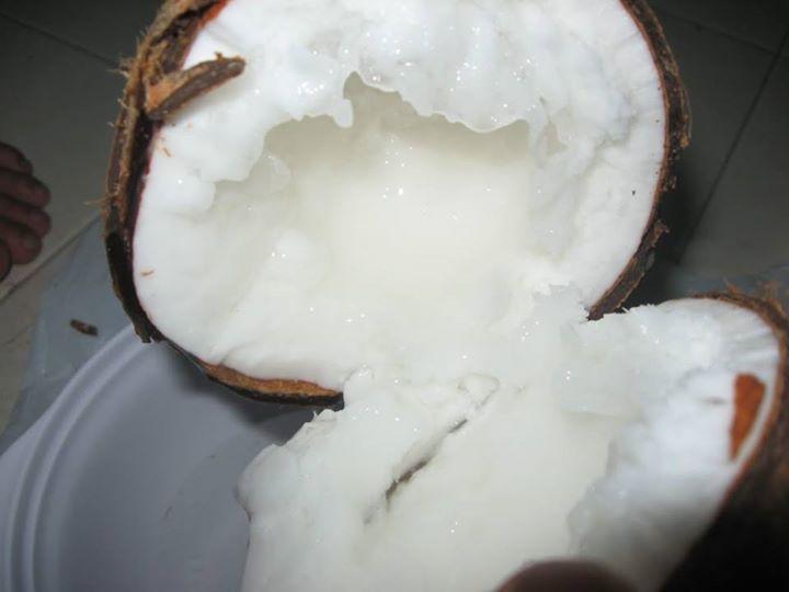 Đặc điểm của Dừa Sáp Trà Vinh