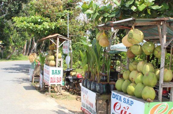 Những trái dừa giá cao kỷ lục Việt Nam
