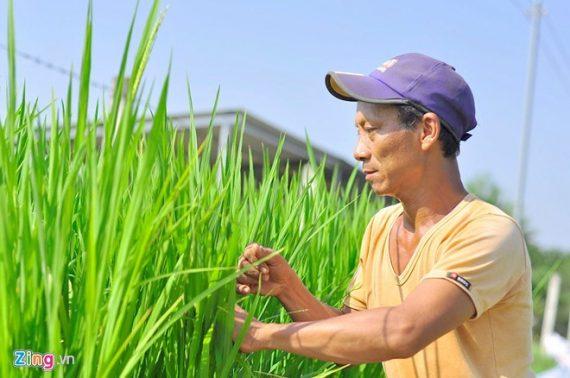 'Nông dân Việt đang phải chiến đấu một cách đơn lẻ'