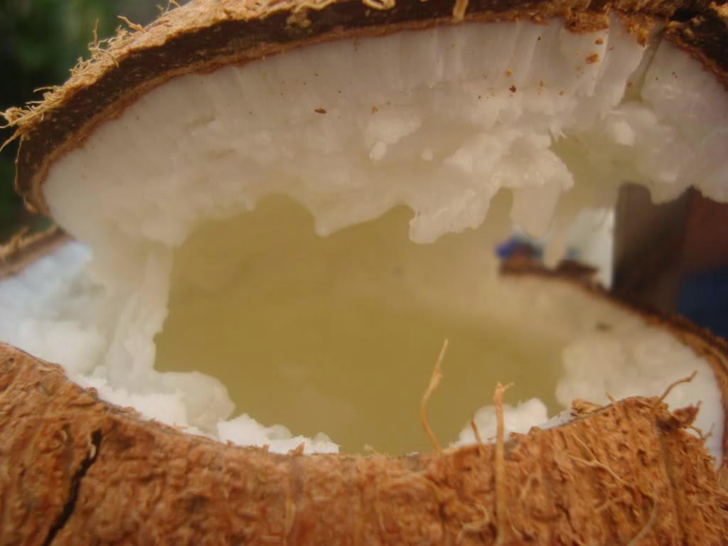 Bán dừa sáp cầu kè trà vinh quận đống đa hà nội