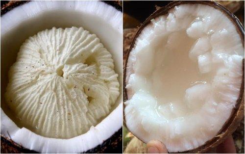 Sự khác nhau giữa dừa sáp ươm giống và dừa sáp cấy phôi