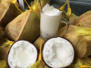 Dừa Sáp Cầu Kè Trà Vinh Giá Rẻ tpHCM
