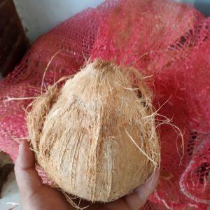 Dừa sáp lột sạch vỏ chuẩn bị làm mứt