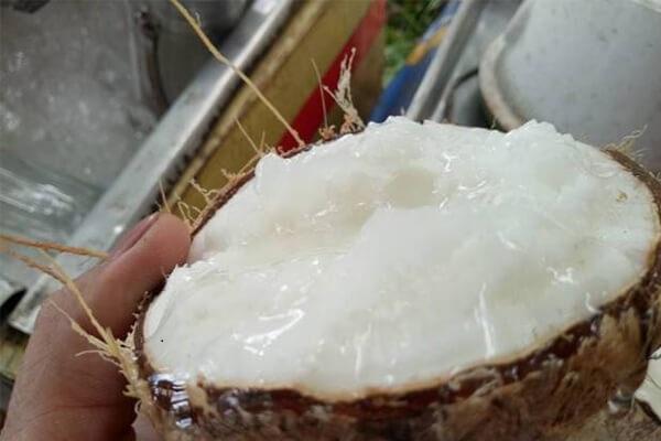 Dừa sáp Tiền Giang