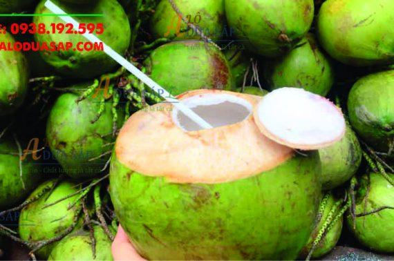 Chuyên cung cấp cây giống dừa dứa giá rẻ tại huyện Tiểu Cần Trà Vinh