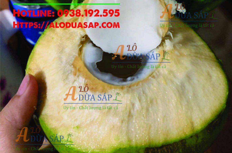 Chuyên cung cấp cây giống dừa dứa giá rẻ tại huyện Cầu Ngang Trà Vinh
