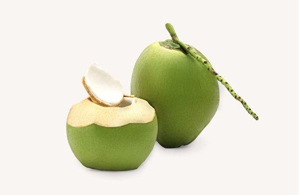 Chuyên cung cấp cây giống dừa xiêm lùn giá rẻ huyện Cầu Kè tại Trà Vinh