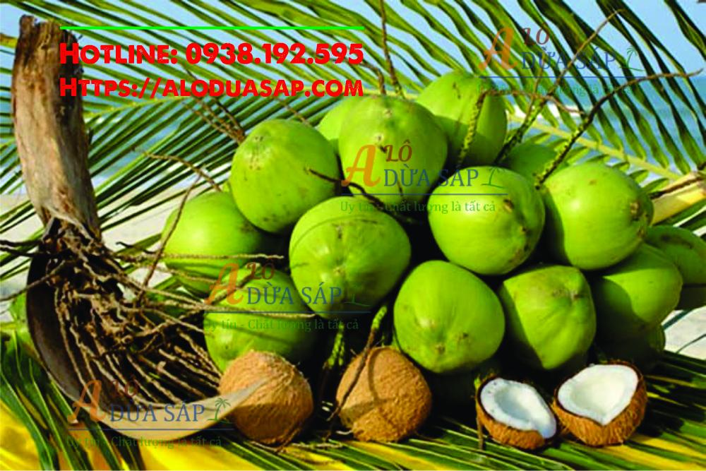Nơi cung cấp giống dừa xiêm lùn uy tín chất lượng tại huyện Tiểu Cần Trà Vinh
